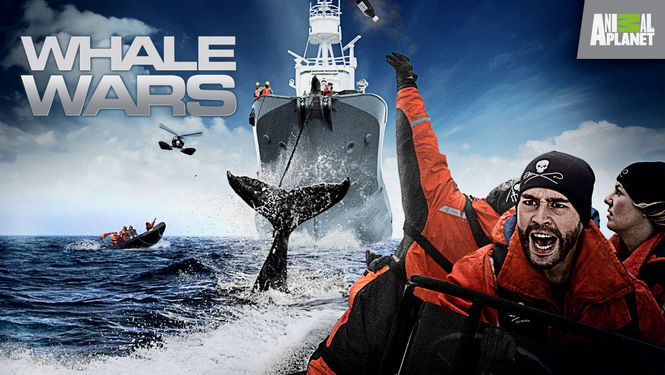 Netflix Box Art for Whale Wars - Season 5