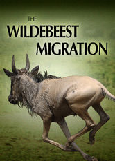 Netflix: The Wildebeest Migration | This documentary captures one of nature's most dramatic events: the perilous 2,000-mile annual migration of African wildebeests across the Serengeti.